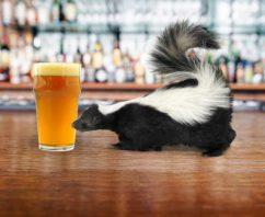 Tú Preguntas, Brewmasters Responde. ¿Qué causa el aroma a zorrillo en una cerveza?